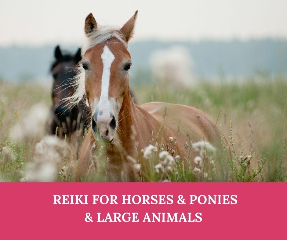 reiki-for-horses-livestock.jpg