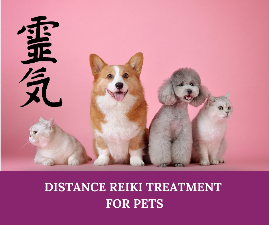 reiki-for-pets-new.jpg
