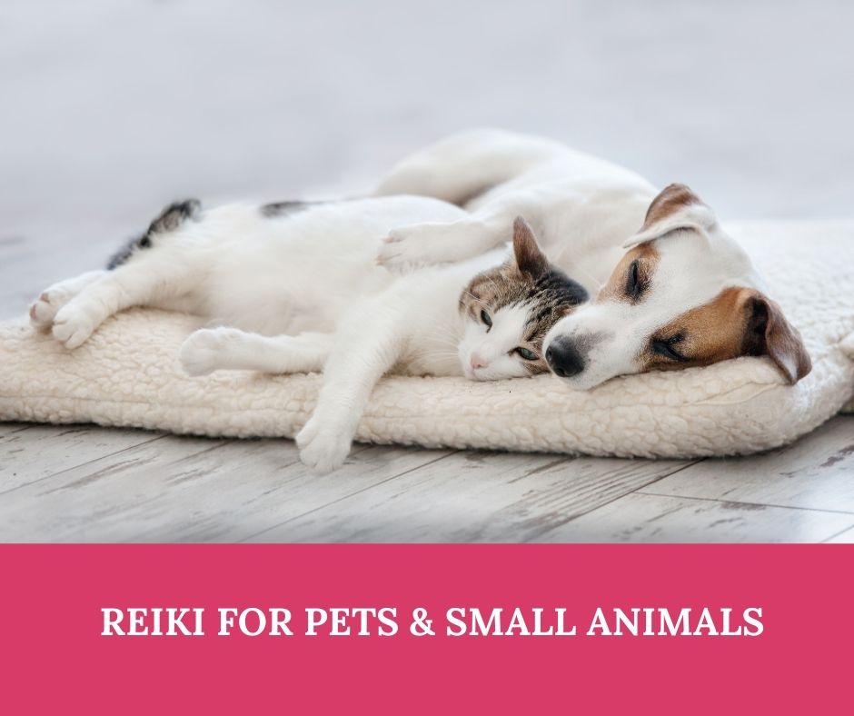 reiki-for-pets.jpg