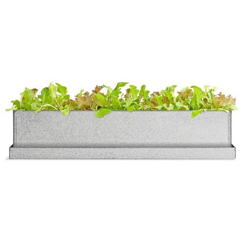 Gourmet Lettuce Windowsill Growbox
