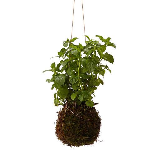 Mint String Garden