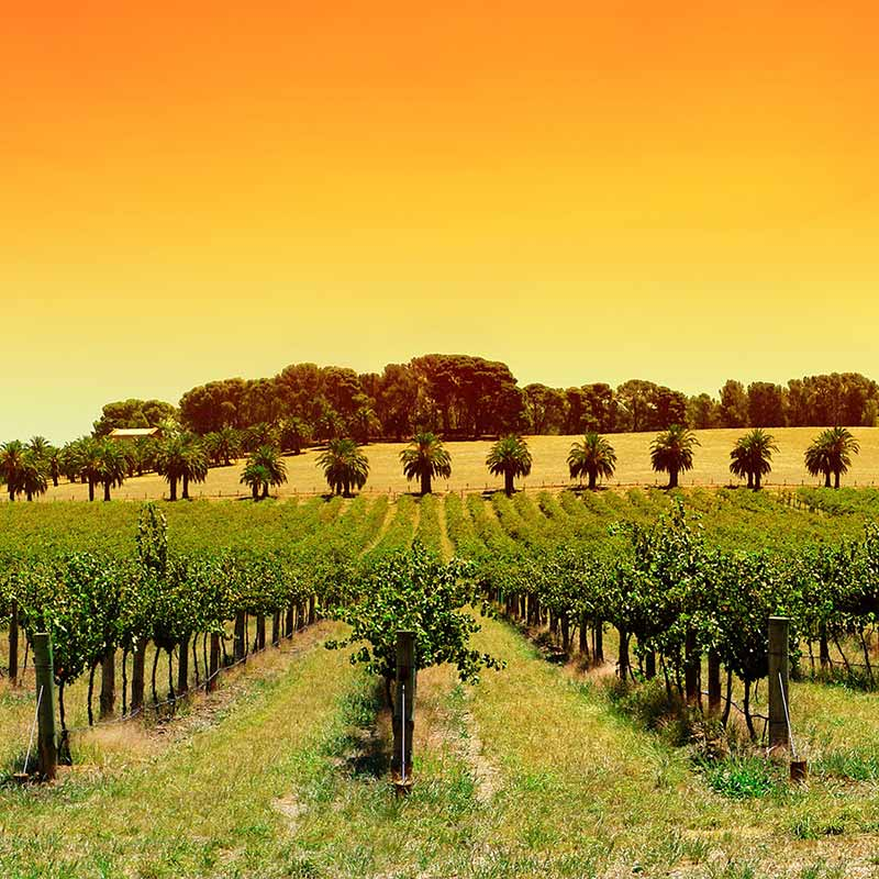 Hewitson Wines: A Back Vintage Vertical Tasting