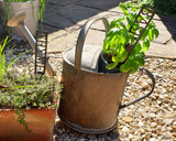2 herb markers in watering can