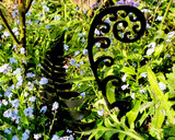 fiddlehead fern sculpture in garden