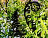 fiddlehead fern sculpture in garden