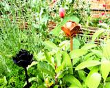 black and copper metal rose in garden