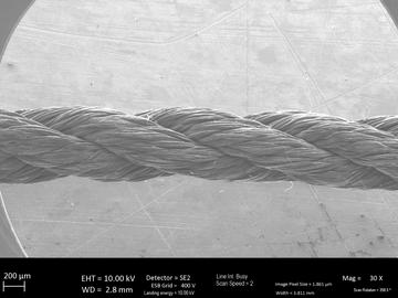microscopic closeup