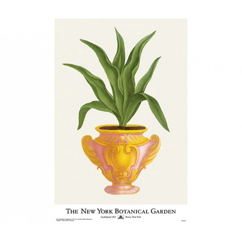 NYBG Aloe In Pink Pot Poster