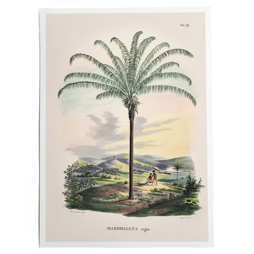 Canopy Palm Print