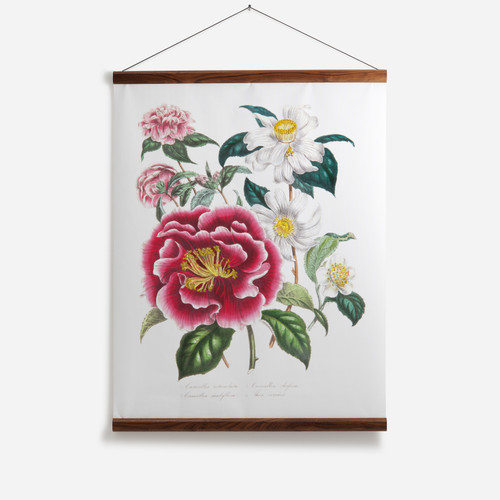 Camellia Reticulata Wall Chart