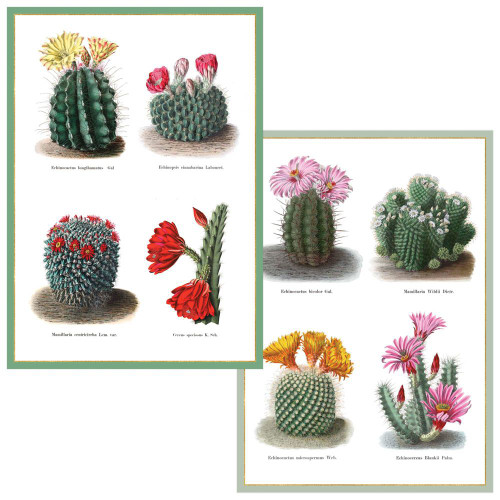 Cacti Boxed Note Cards