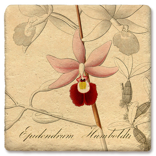 Pink Cattleya Marble Orchid Coaster