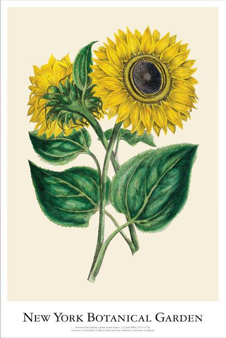NYBG Sunflower Poster