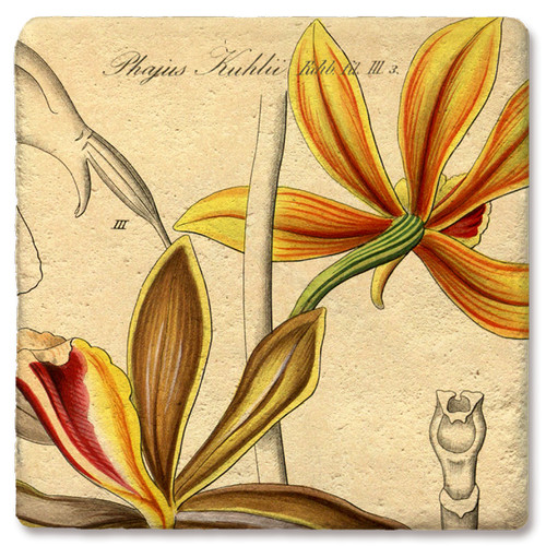 Yellow Phaius Khulu Orchid Marble Coaster