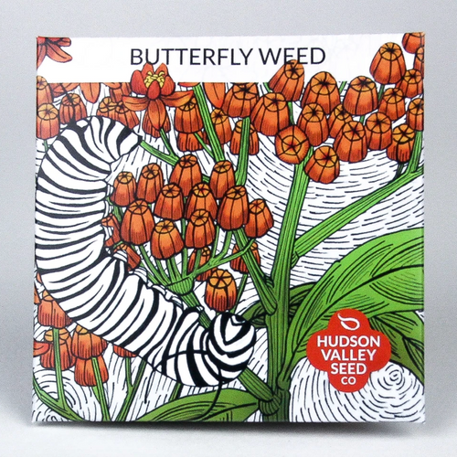 Hudson Valley Seed Library - Butterfly Weed