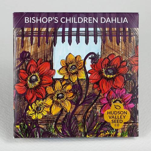 Hudson Valley Seed Library - Bishop's Children Dahlia