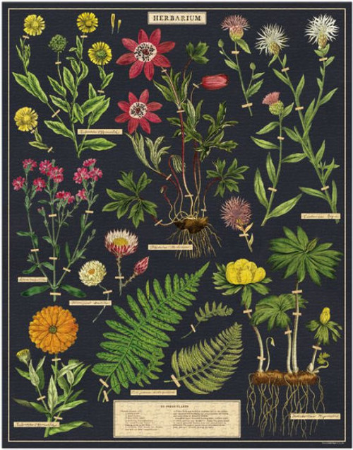 Cavallini & Co - Herbarium Puzzle