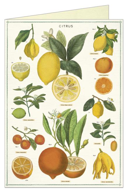 Citrus Greeting Card