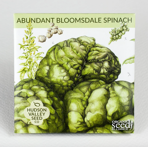 Hudson Valley Seed Library - Abundant Bloomsdale Spinach