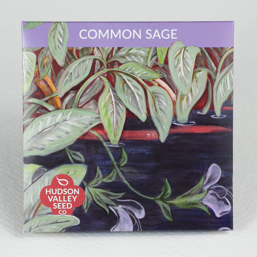 Hudson Valley Seed Library - Common Sage