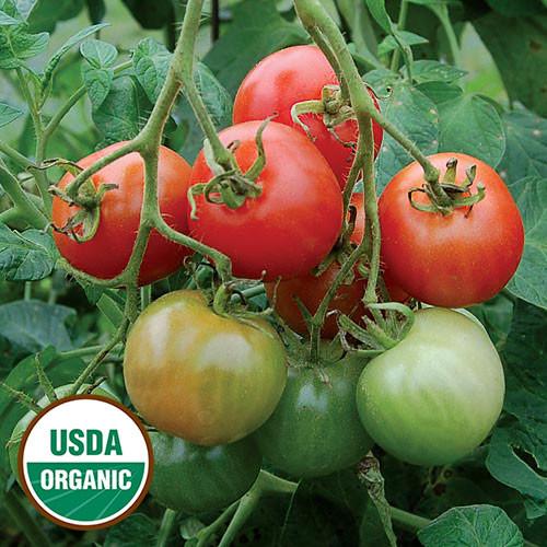 Seed Savers - Stupice Tomato