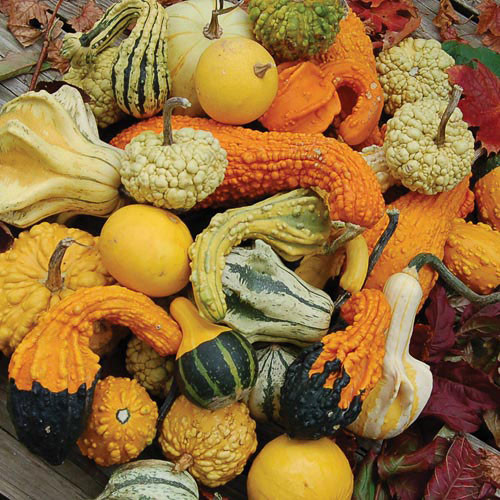 Seed Savers - Gourd Mix