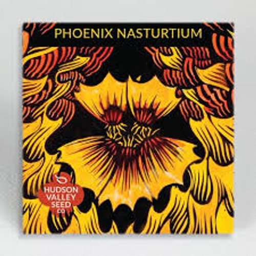 Hudson Valley Seed Library - Phoenix Nasturtium