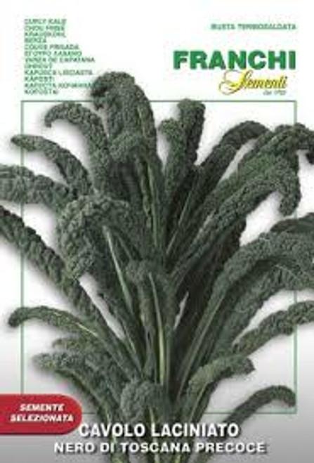 Franchi Seeds - Cavolo Laciniato
