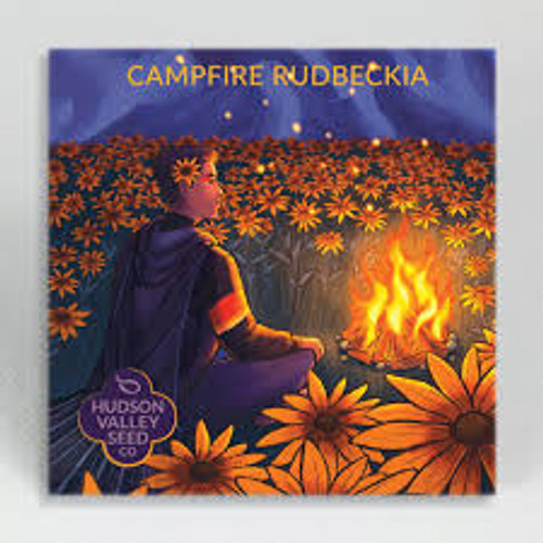 Hudson Valley Seed Library - Campfire Rudbeckia
