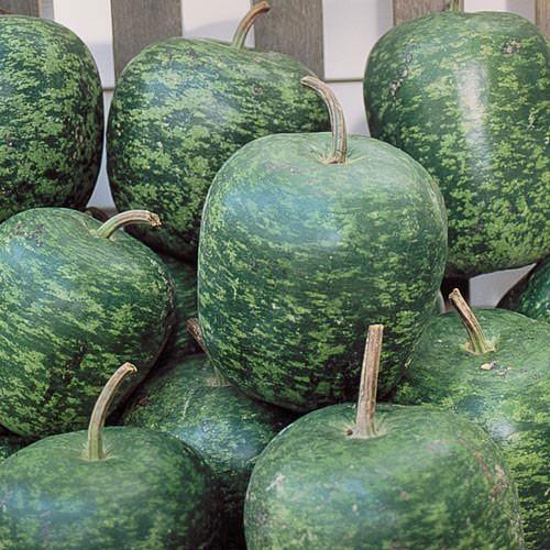 Seed Savers - Apple Gourd