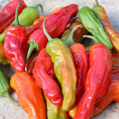Seed Savers - Shishito Pepper