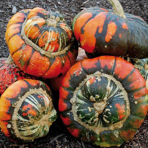 Seed Savers - Turk's Turban Squash