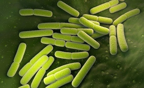 E-Coli Removal from Water
