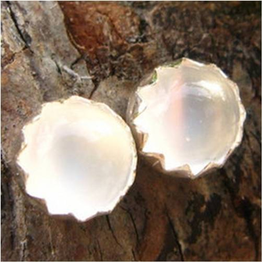 White Moonstone Cabochon Stud Earrings