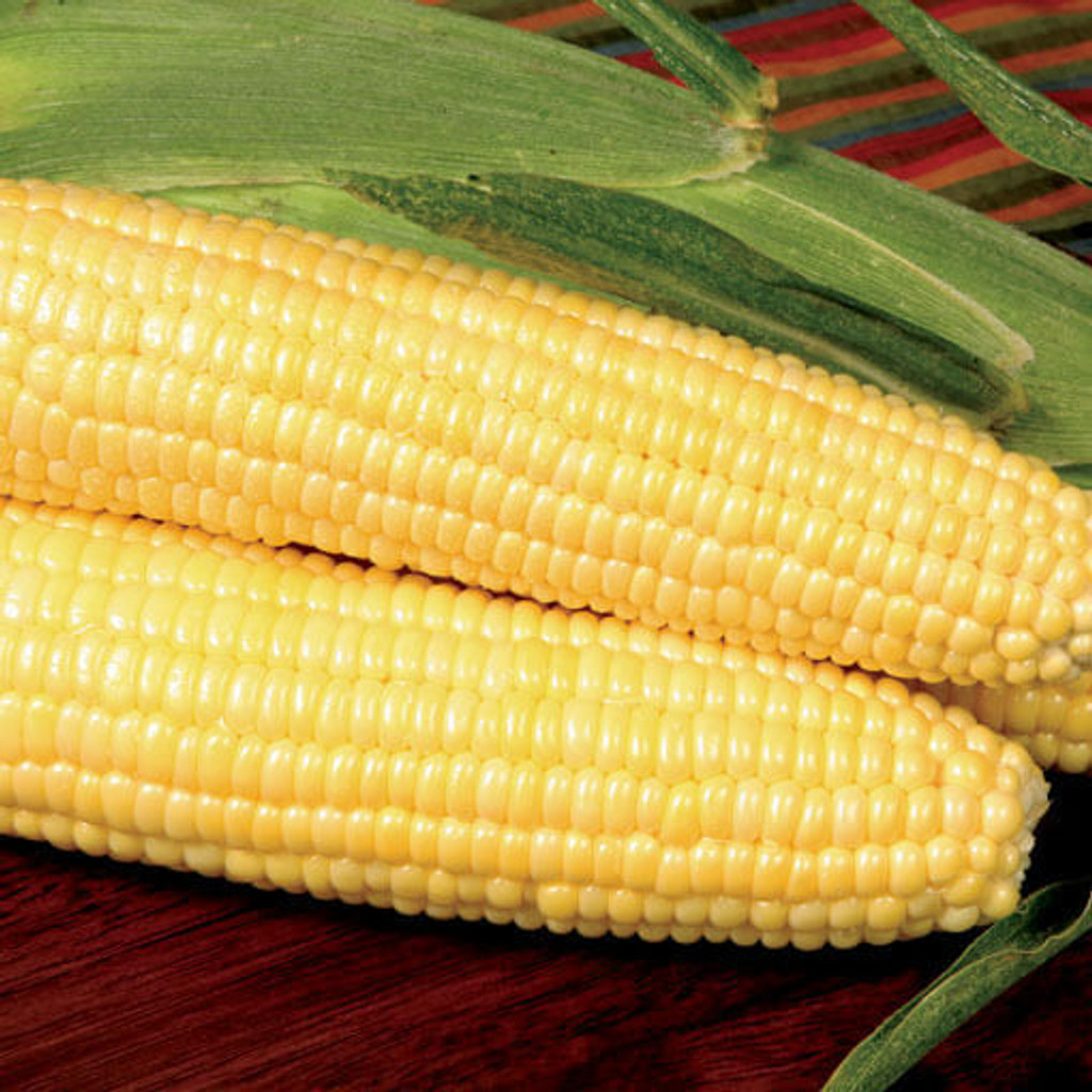 Aspire Sweet Corn (Roundup Ready)