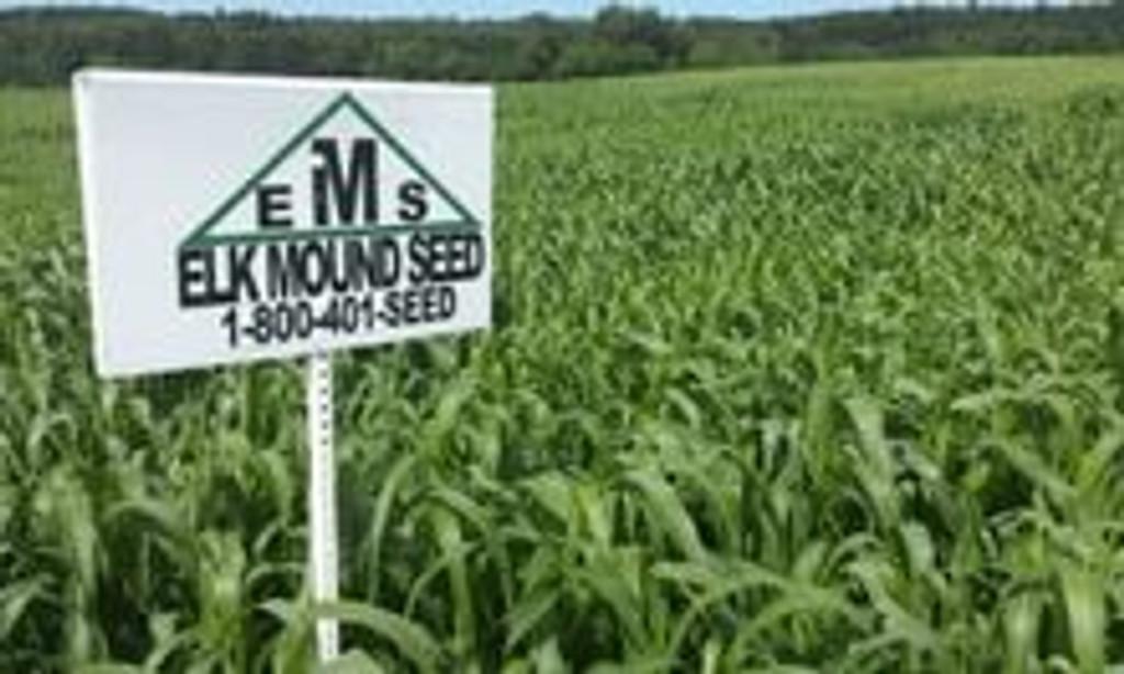 BMR (Brown Mid-Rib) Sorghum Sudan Grass