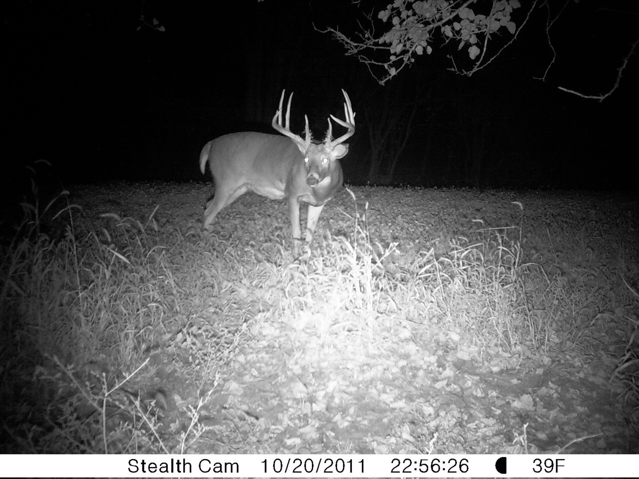 Clover Mix Food Plot Seed