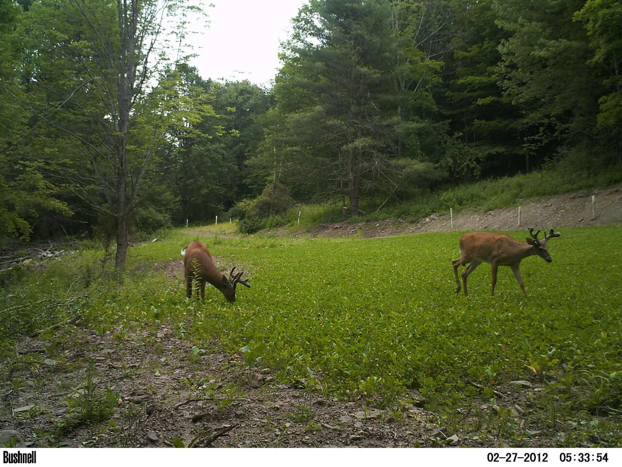 Annual and Perennial Mix Food Plot Seed