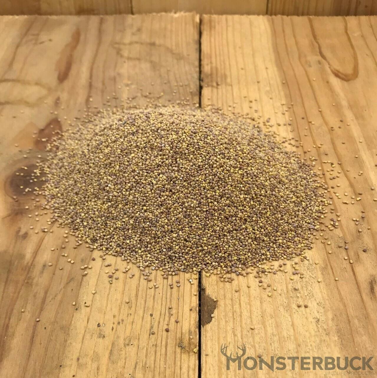White Dutch Clover Food Plot Seed
