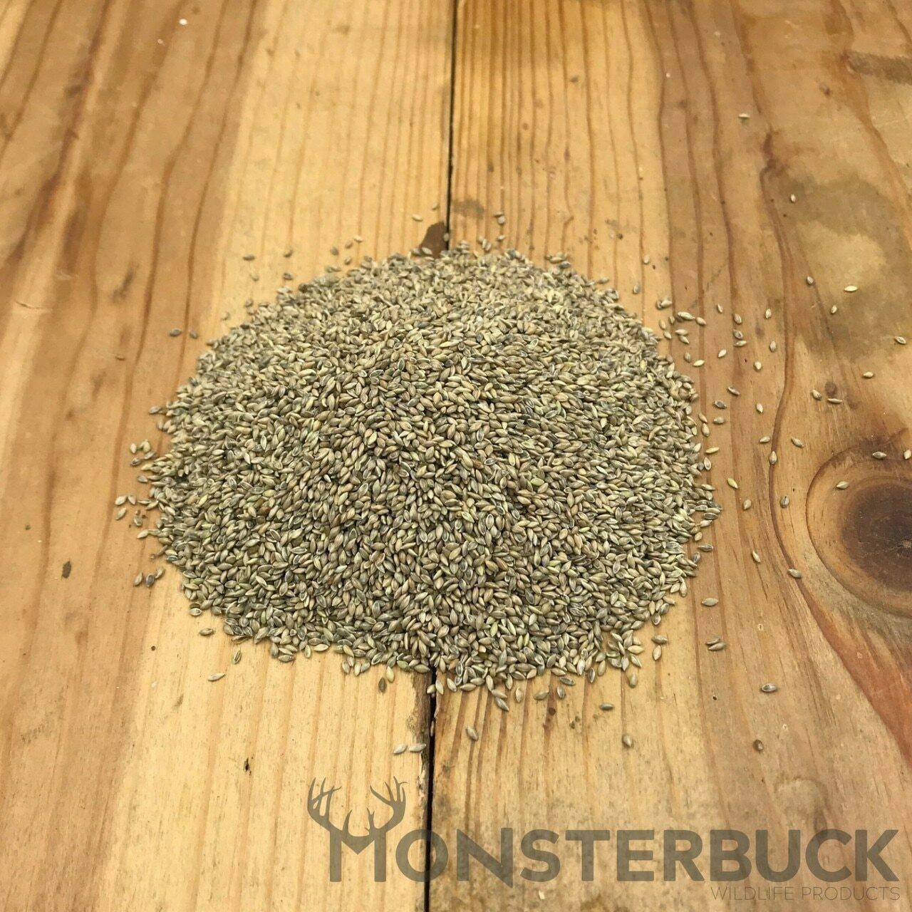 Cave-In-Rock Switchgrass Seed (Panicum virgatum)