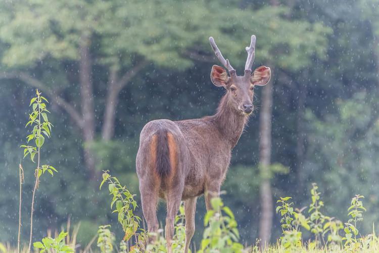 Popular Deer Food Plot Seeds