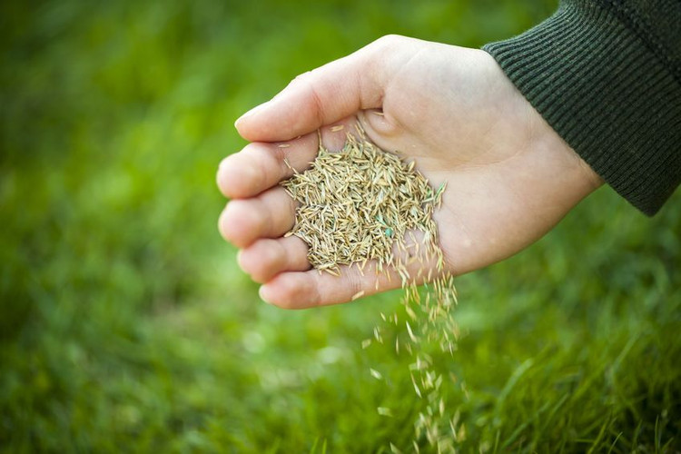 The Best Grass Seed to Plant in the Midwest