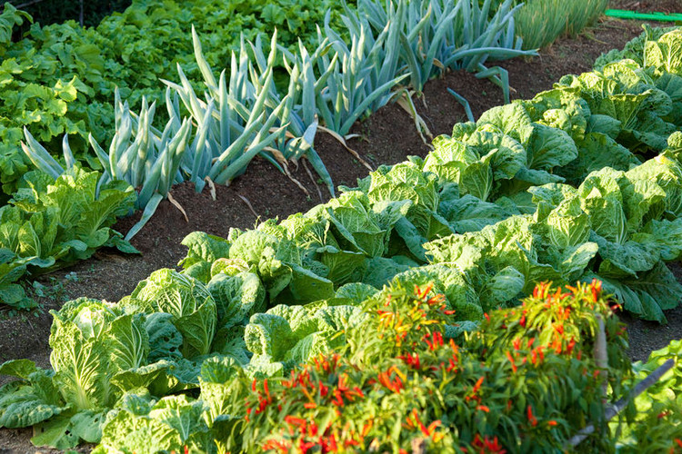 The Best Cover Crop Seeds for Home Vegetable Gardens