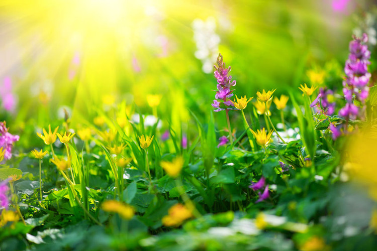Wildflower Mixes for Your Climate