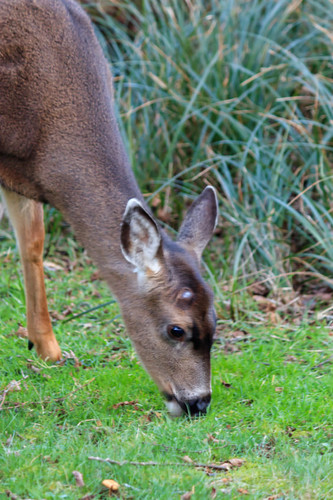 What is a Deer Food Plot, and Why Would You Want One?