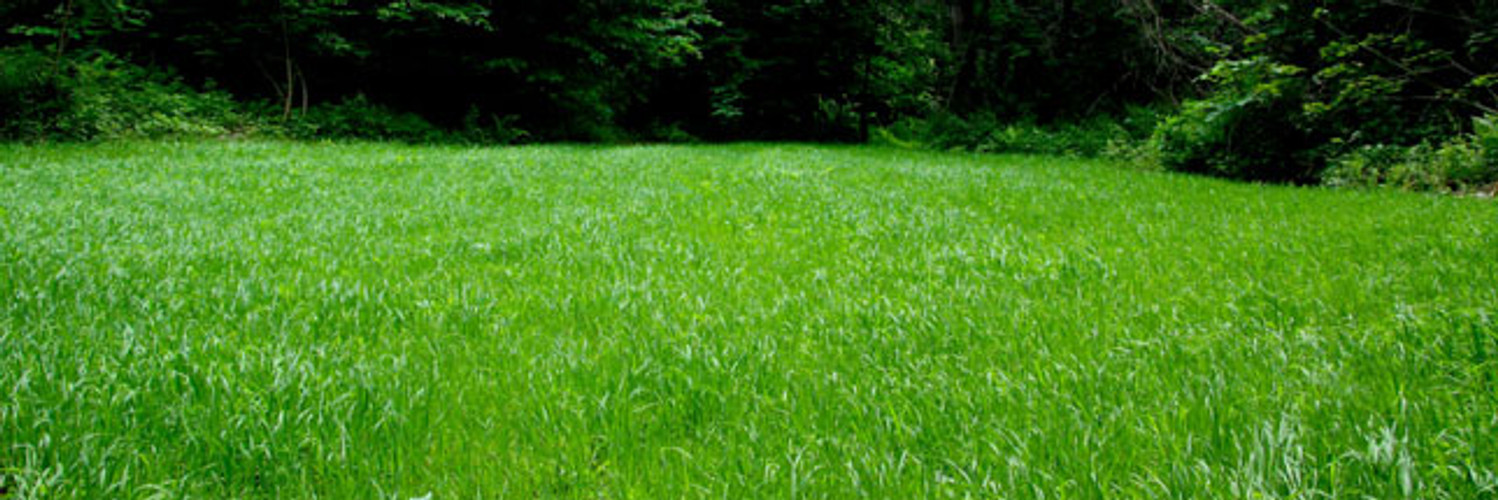 Managing Weeds in Your Food Plot