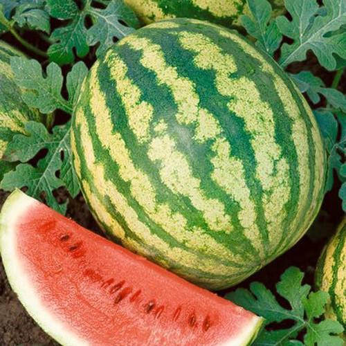 Crimson Sweet Watermelon