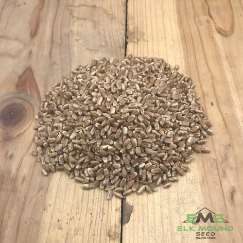 Certified Linkert Spring Wheat