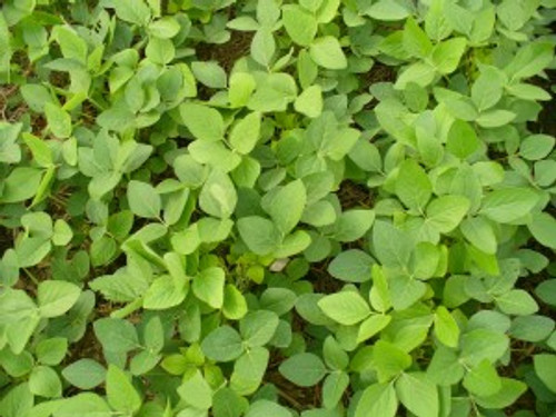 Stutsman Soybean - 0.7 RM
