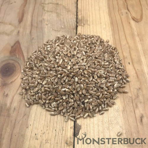Winter Wheat Seed